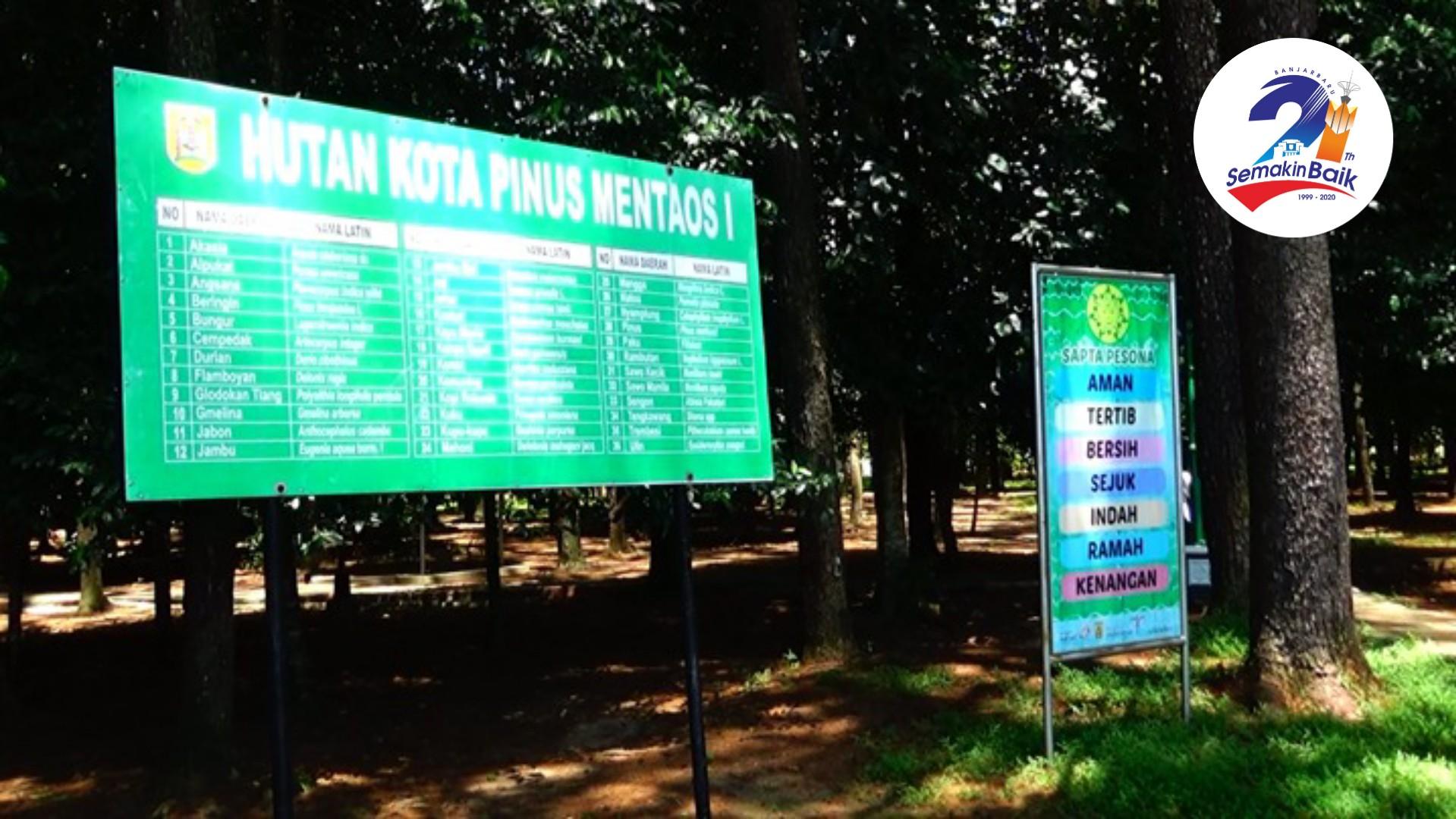 Hutan Pinus Mentaos I, Digandrungi Kaum Milenial - Habar Kalimantan