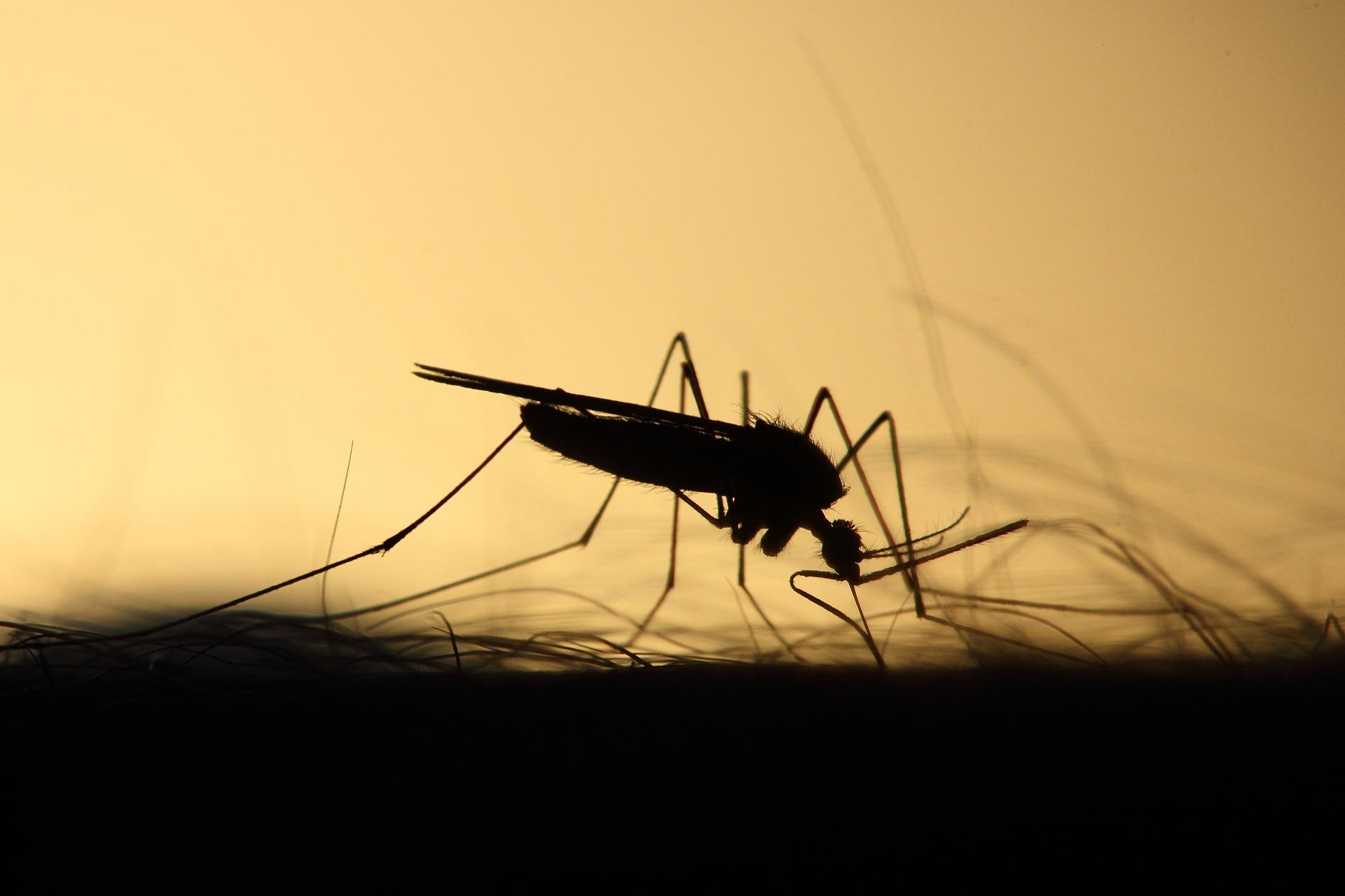 mosquito 3860900 1920