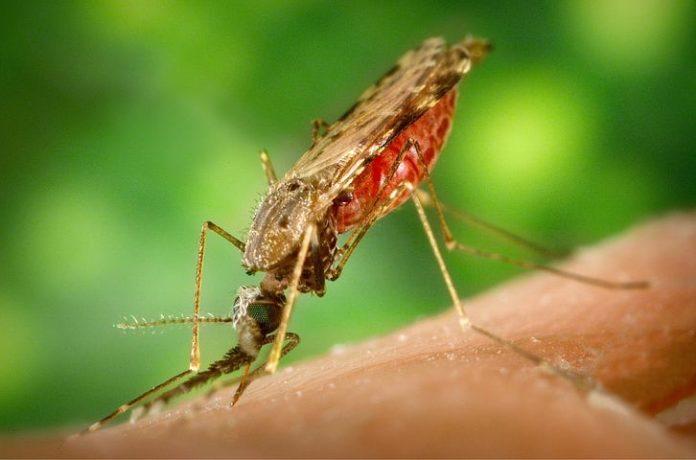 mosquito 1016254 480
